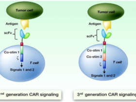 细说CAR-T细胞免疫疗法