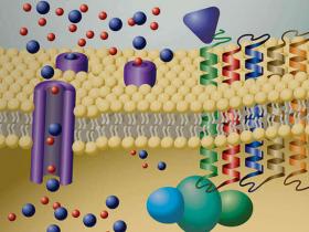 离子通道系列3——瞬时受体电位 (TRP) 离子通道