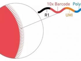 单细胞转录组测序的常用方法