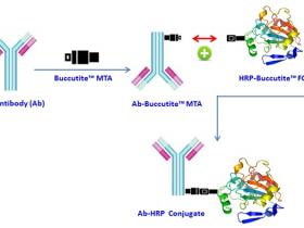 特别好用的抗体/蛋白快速标记工具,你值得拥有