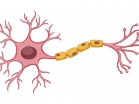 多发性硬化症(MS)之神经髓鞘定位染色试剂盒