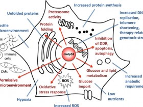 好马配好鞍-Abbkine P53抗体,为癌症基础研究助力!