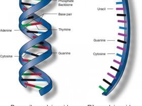 细胞质和细胞核RNA提取试剂盒(21000)中文说明书 & FAQ