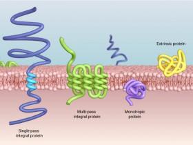 预测:蛋白质胞内胞外分布!