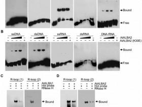 文献解读丨论一种蛋白的自我修养