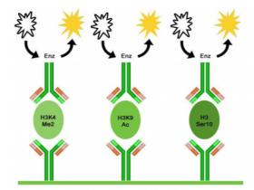 22种组蛋白H3修饰一站式检测试剂盒