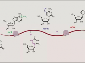 小综述:RNA m6A甲基化