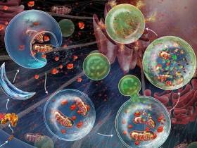 探秘细胞程序性死亡2——细胞自噬工具大放送