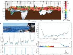 生物评论周报第108期:《科学》: 鲸鱼形成巨大体型的原因与生态限制