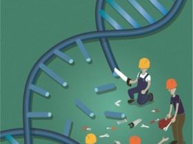 DNA损伤检测技术,你知道多少?