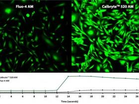 钙离子荧光探针大盘点—助您拍出好钙片