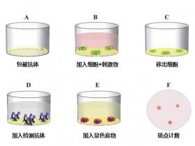 Mabtech肽库帮您一键解决ELISpot阳性对照的设置问题