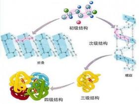 1min轻松get全套蛋白提取及定量解决方案