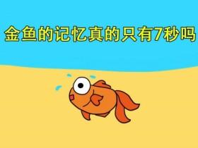 谁说鱼的记忆只有7秒?DNA甲基化可以实现记忆接力