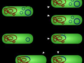 Norgen质粒DNA纯化和内毒素去除方案打包组合