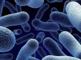 系列一:Norgen的人细菌/酵母病原体检测试剂盒