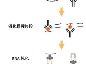 Epigentek上新:CUT&RUN助您实现微量RNA m6A甲基化修饰的富集纯化