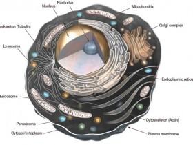 超全细胞器荧光探针强势来袭,点亮您细胞的每个角落
