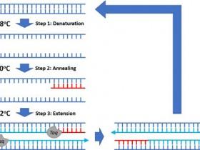 提高PCR扩增特异性,BlazeTaq™ SYBR® PCR试剂盒了解一下