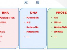 RNA/DNA/蛋白质三合一提取试剂盒中文说明书&FAQ