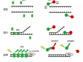 一步法RT-qPCR试剂盒,让你的PCR一步到位