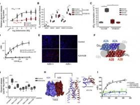 生物评论周报124期:Cell:腺苷/A2B受体信号改善衰老的影响并抵消肥胖