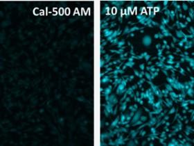 全套荧光离子探针倾情推荐——钙离子+锌离子篇
