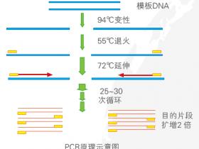 PCR疑难问题粉碎机(一)——终点PCR