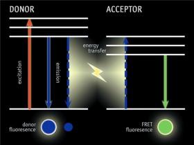荧光染料的重要应用,以及如何判断亮度?