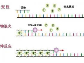 PCR疑难问题粉碎机(二)——荧光定量PCR