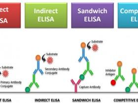 食品安全检测,Elisa试剂盒怎么选?