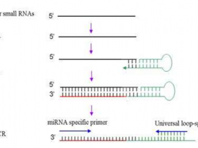 逆转录PCR技术,定量更精确
