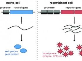 超强应援:如何选择荧光素酶报告基因产品?