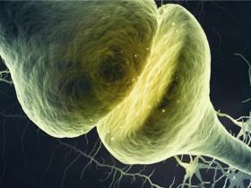 Biosensis突触功能研究相关抗体