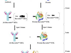 Buccutite™—全新一代的蛋白交联技术