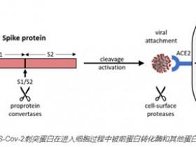 SARS-CoV-2靶向检测试剂盒相关研究