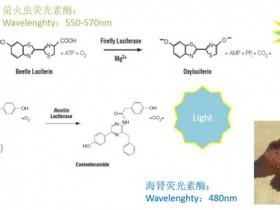 超全超实用的荧光素酶报告基因检测工具