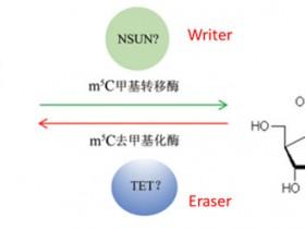 表观遗传之RNA甲基化一5mc甲基化