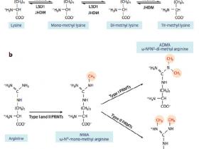 表观遗传之组蛋白修饰—组蛋白甲基化、磷酸化