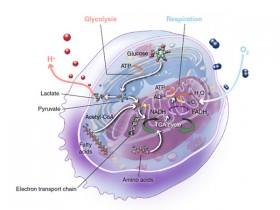 超全超实用的细胞代谢——糖酵解、蛋白质代谢、辅酶和辅因子等研究工具