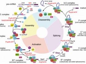 生物评论周报第146期:Science:施一公等揭示剪接体激活过程中结构重塑的分子机理