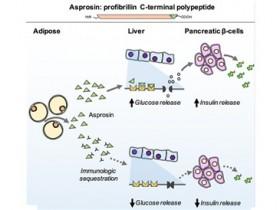 葡萄糖调控热门靶标——白脂素(Asprosin)ELISA试剂盒