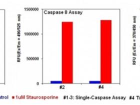 Caspases酶系列2:酶活性检测试剂盒解决方案