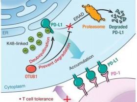 Nature Methods:单T细胞转录组学绘制出T细胞受体库的功能图谱
