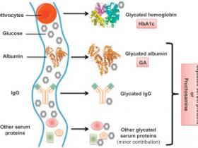 血糖研究热门靶标:Abbexa糖化白蛋白研究相关产品