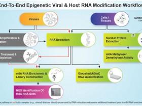 病毒RNA m6A甲基化研究丨定量检测、酶活性分析、抗体全方案
