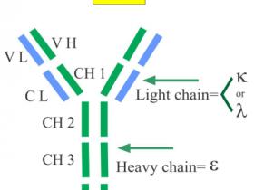 人IgE不同抗原表位的抗人lgE单克隆抗体解决方案