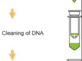 如何定量检测目的基因甲基化水平——m6A? 5mC?5hmC?