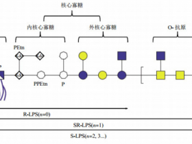 高品质抗脂多糖核心单克隆抗体,克隆号WN1 222-5