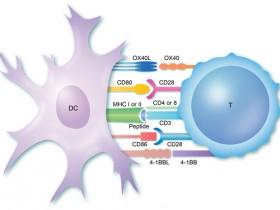 T细胞增殖,流式如何检测?